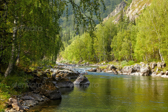 Altai river Kumir - Stock Photo - Images