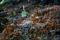 Lichen and Microfauna - PhotoDune Item for Sale