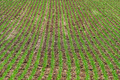 Green rows of grass - PhotoDune Item for Sale