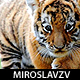 miroslavzv