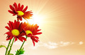 Sunrays Flowers - PhotoDune Item for Sale