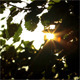 Sunlight Through The Leaves - VideoHive Item for Sale