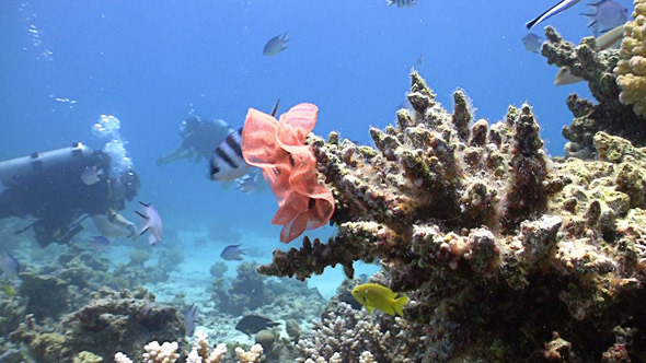 Colorful Fish on Coral Reef Red Sea 6