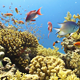 Colorful Fish on Vibrant Coral Reef, Red Sea 6 - VideoHive Item for Sale
