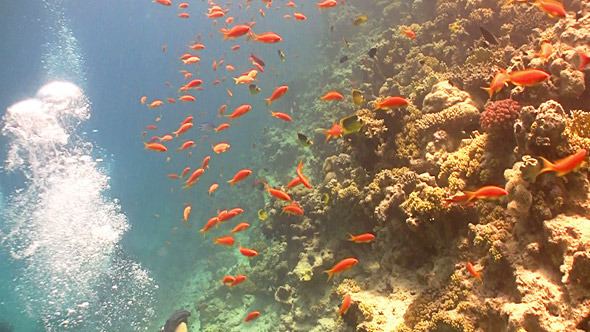 Colorful Fish on Vibrant Coral Reef Red Sea 11
