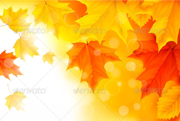 Autumn background with leaves  Back to school  Vec - Flowers & Plants Nature
