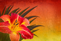Red orange and yellow Background with daylily - PhotoDune Item for Sale