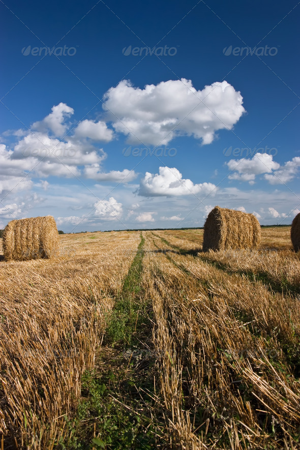 Hay roll and clouds - Stock Photo - Images