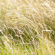 Grass On The Wind - VideoHive Item for Sale
