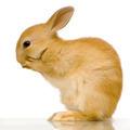 rabbits dating - PhotoDune Item for Sale