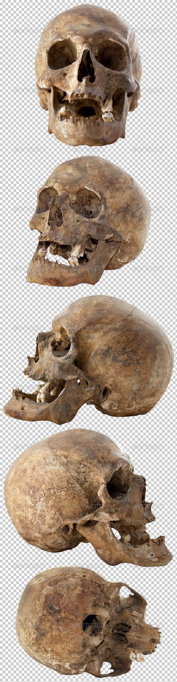 Five Human Skulls Set