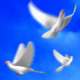Flying Doves (Pack Vol.4) - VideoHive Item for Sale