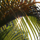 Sunshine And Palm Leaves 4 - VideoHive Item for Sale