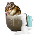 Funny chipmunk taking a bath - PhotoDune Item for Sale