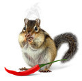 Funny chipmunk eating hot pepper - PhotoDune Item for Sale