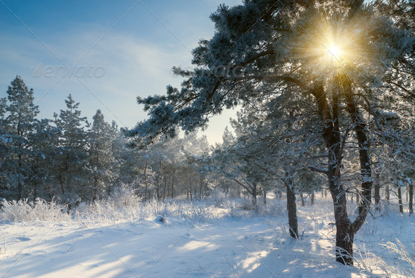 Beautiful winter morning - Stock Photo - Images