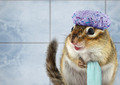 Funny chipmunk bathing - PhotoDune Item for Sale