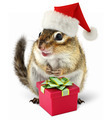 Chipmunk in red Santa Claus hat with gift box - PhotoDune Item for Sale