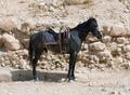 Black Horse - PhotoDune Item for Sale