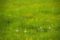 Closeup of green grass - PhotoDune Item for Sale