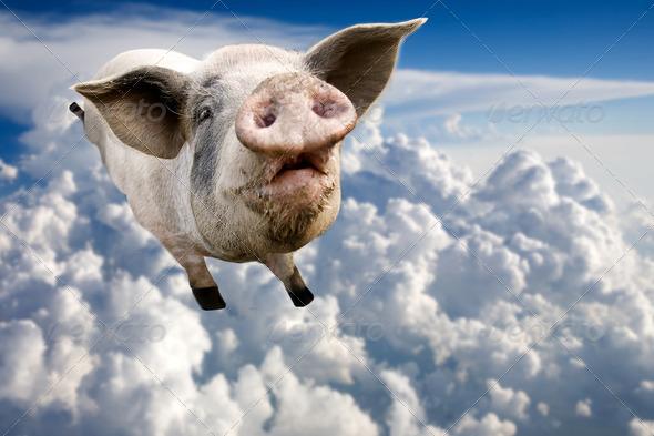 PhotoDune Flying Pig 257020
