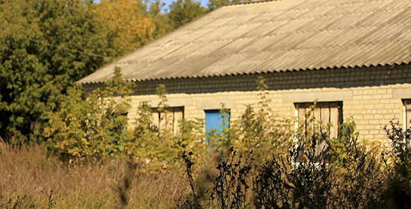 Dry Stalks And Old Building