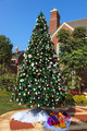 Christmas tree in the middle of a new residential district - PhotoDune Item for Sale