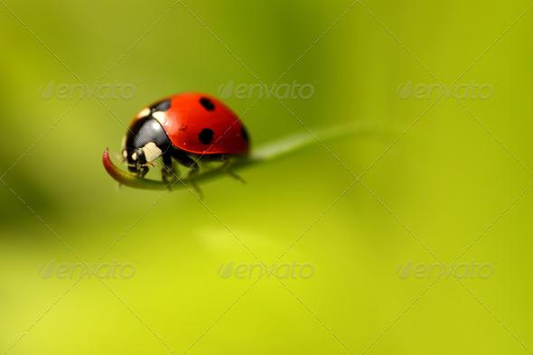 PhotoDune Ladybug 309952