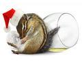 Funny drunk chipmunk dress santa hat with champagne glass - PhotoDune Item for Sale