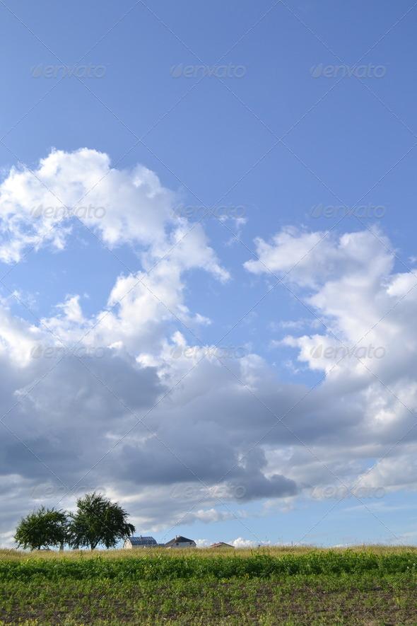 Landscape grass sky - Stock Photo - Images