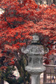 Japanese lantern in fall - PhotoDune Item for Sale