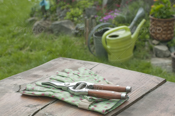 Garden gloves and clippers in garden - Stock Photo - Images