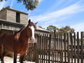 Brown, Fenced Horse - PhotoDune Item for Sale