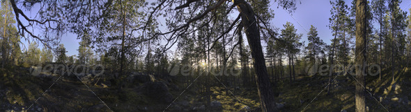 Nature HDRI II - Forest Glade - 3DOcean Item for Sale