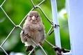Bird - PhotoDune Item for Sale
