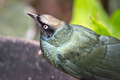 Green Bird - PhotoDune Item for Sale