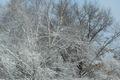 Winter Snow Landscape - PhotoDune Item for Sale