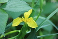 Yellow Wildflower - PhotoDune Item for Sale