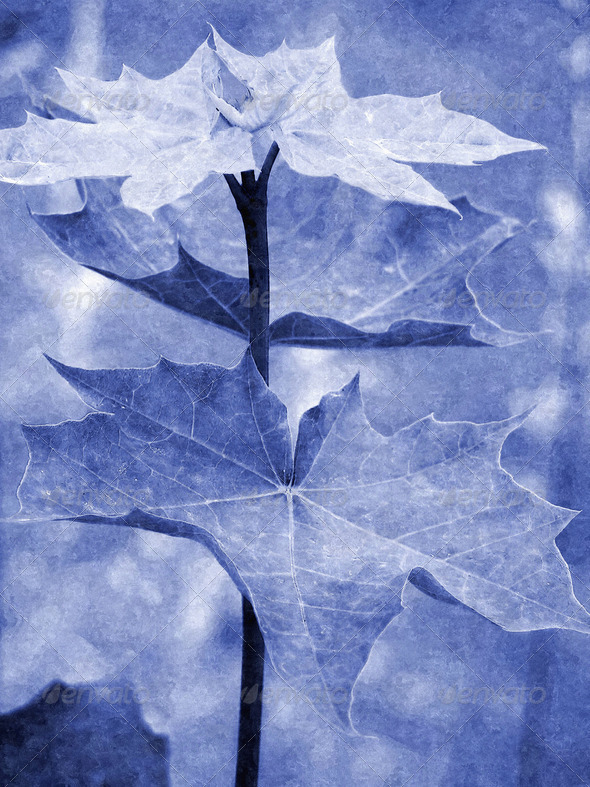 Blue Leaf - Stock Photo - Images