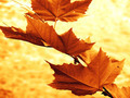Autumn - PhotoDune Item for Sale