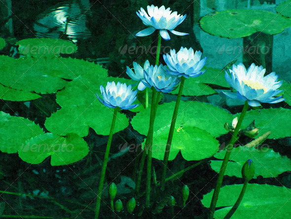 Blue Water Lilies - Stock Photo - Images