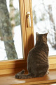 Cat Sitting On Window Ledge Looking At Snowy View - PhotoDune Item for Sale