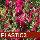 Roses - VideoHive Item for Sale