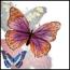 ButterflyHerder
