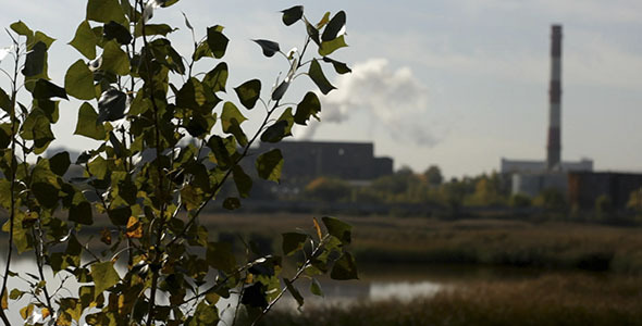 Green Leaves And Industrial Smokestack