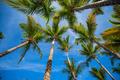 Palm Trees - PhotoDune Item for Sale