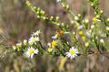 Honey Bee on Wildflower in Prairie Meadow - PhotoDune Item for Sale