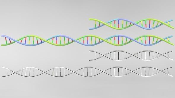 DNA strand model - 3DOcean Item for Sale