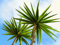 Palm Trees - PhotoDune Item for Sale