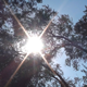 The Sun Behind Trees - VideoHive Item for Sale